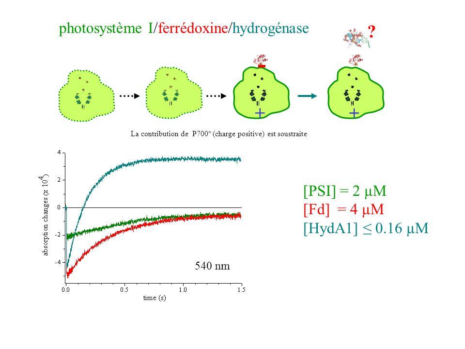 - + photosystème I/ferrédoxine/hydrogénase [PSI] = 2 µM [Fd] = 4 µM